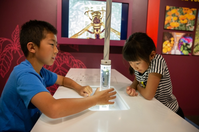 Two children view an insect using a large microscope